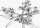 Blossoming - Fruit setting