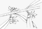 Ταχεία ανάπτυξη του καρπού – σκλήρυνση πυρήνα