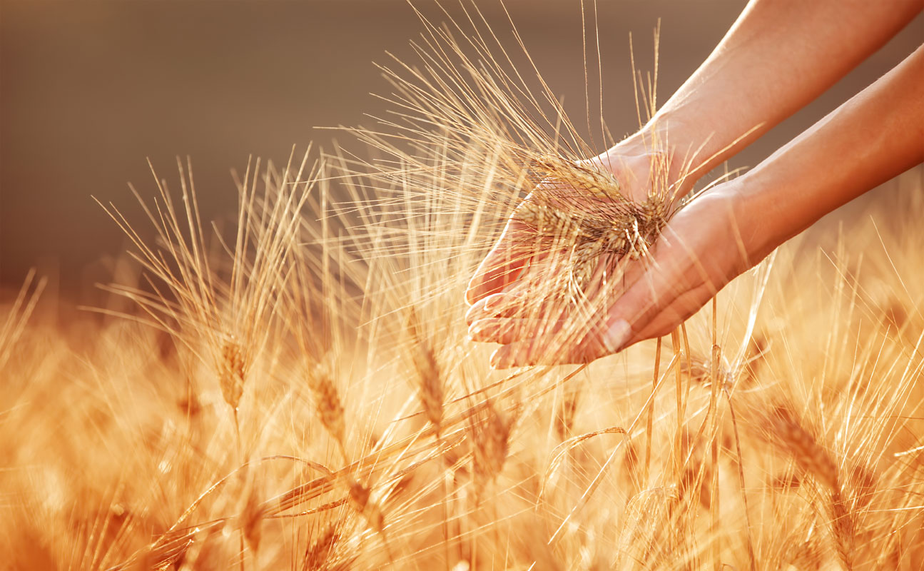 Fertilizer Day