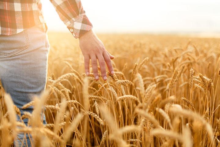Prihrana žitarica i vrste đubriva